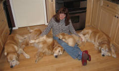 Suzi's extended golden family